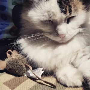 chai mouse